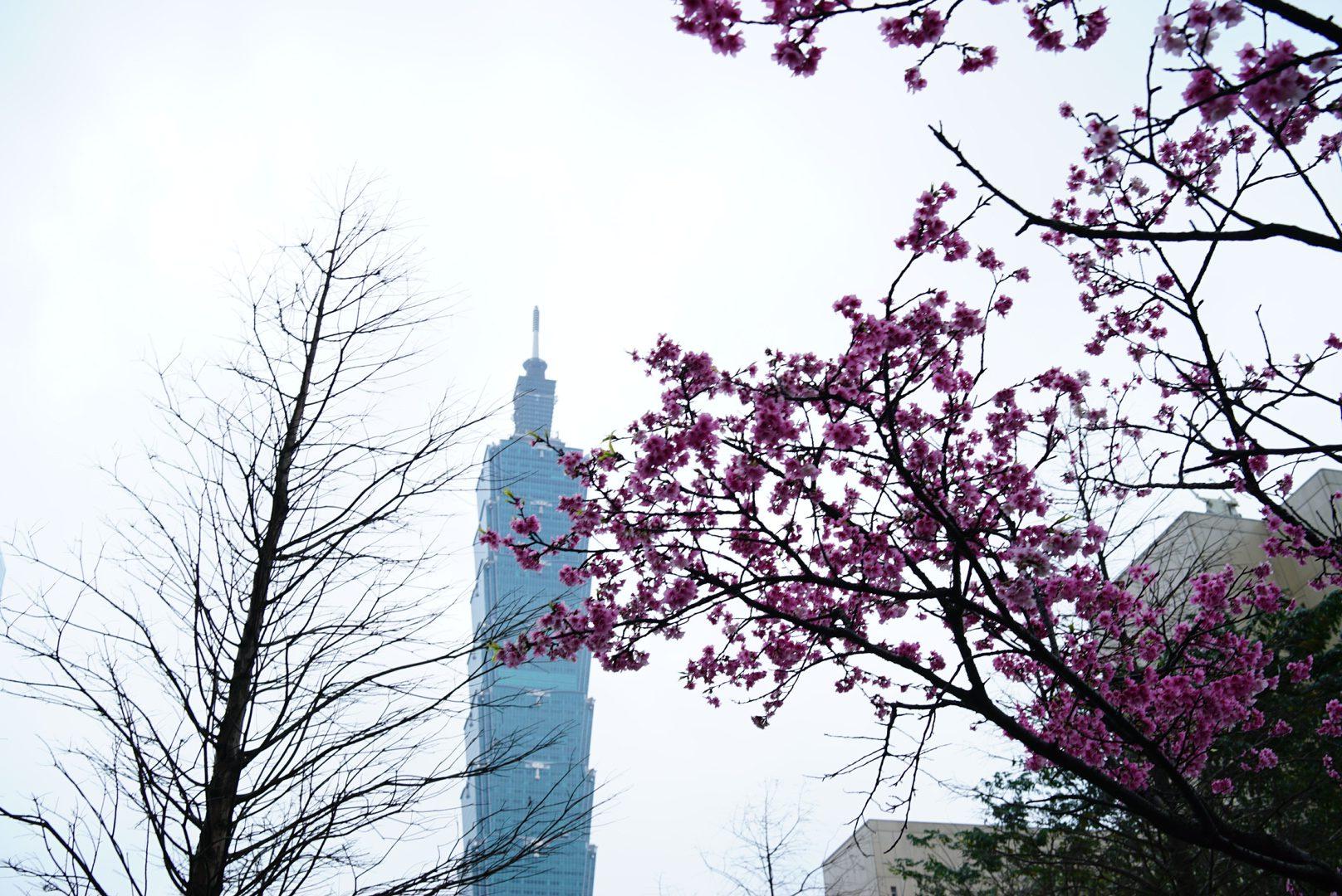 Taiwan 🇹🇼